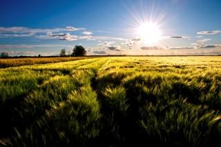 Landschaftsbild mit scheinender Sonne über grünem Feld